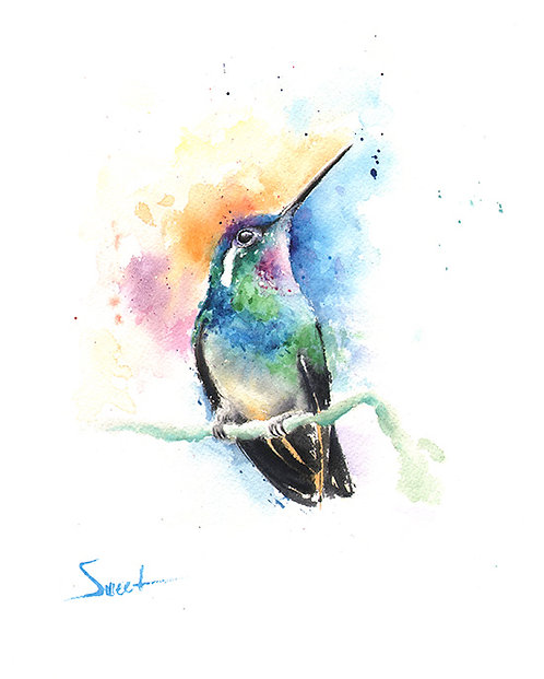 Mountain Gem Hummingbird Watercolor Print