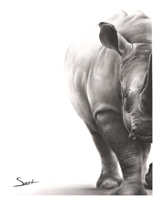 White Rhino Dry Brush Painting