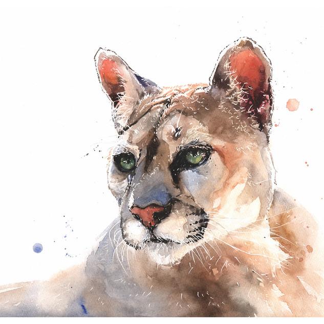 Star Cougar