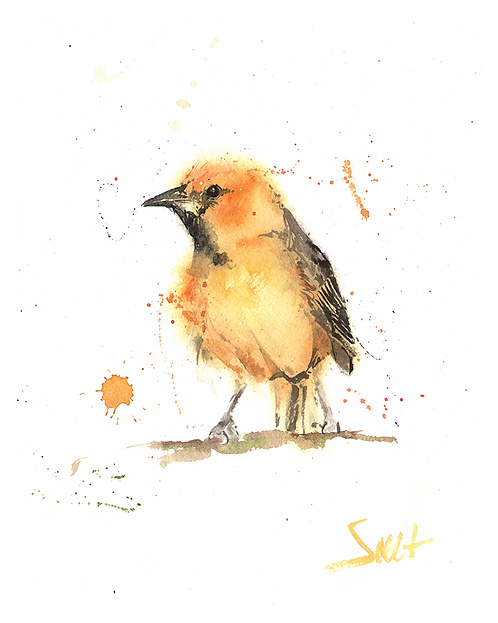 Oriole Watercolor Print