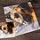 Thumbnail: Miniature (5x5 in.) Pet Portrait or Wildlife Commission