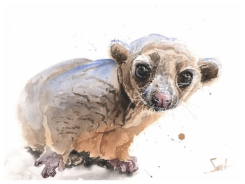 Wednesday Kinkajou Print