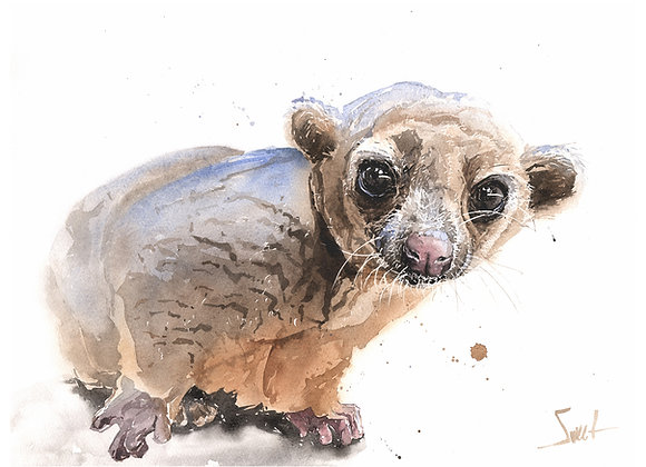 Wednesday Kinkajou Original Watercolor Painting