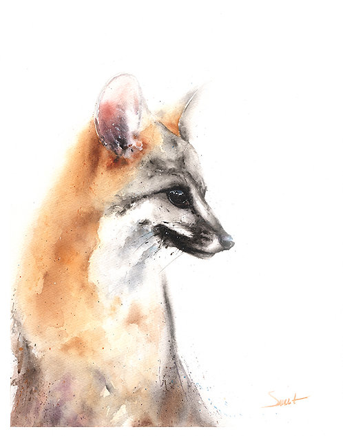 Grey Fox Watercolor Print