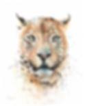 Leopard Web.png