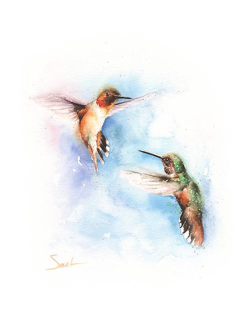 Rufous Hummingbird Watercolor Print
