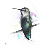 Anna's Hummingbird Watercolor, 8x10, 2018