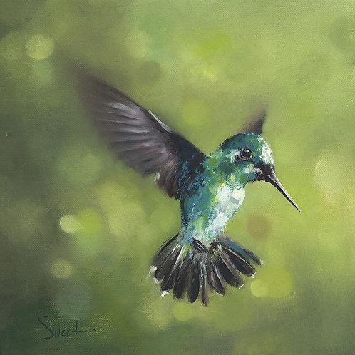 Green Hummingbird Oil Painting