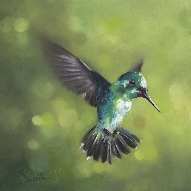 Green Hummingbird, 12x12, 2015