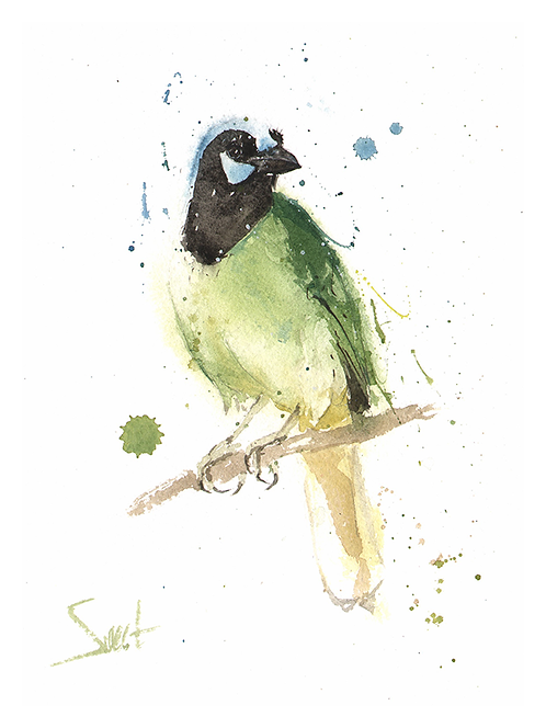 Green Jay Original Watercolor Painting
