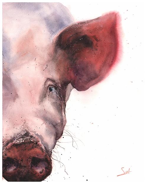 Pig Watercolor Print