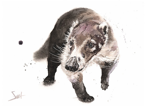 Macano Coatimundi Original Watercolor Painting