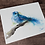 Thumbnail: Northern Bluebird Watercolor Print