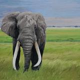 Tusks, 30x24, 2019