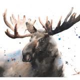 Moose Watercolor, 16x12, 2018