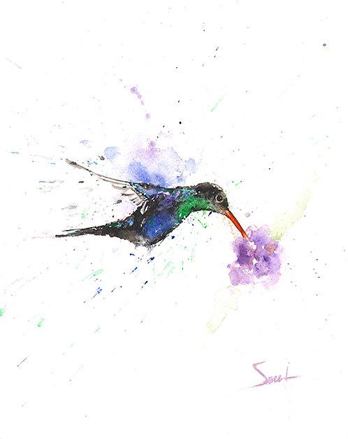 Violet Bellied Hummingbird Watercolor Print