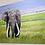 Thumbnail: Original 'Tusks' Oil Painting