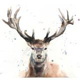 Elk Watercolor, 20x16, 2018