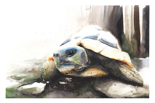 Tortoise Watercolor Print