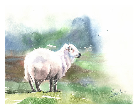 Sheep Original Watercolor Painting