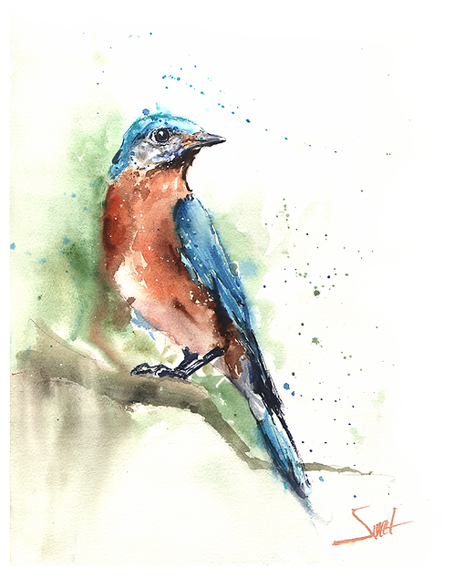 Eastern Bluebird Watercolor Print