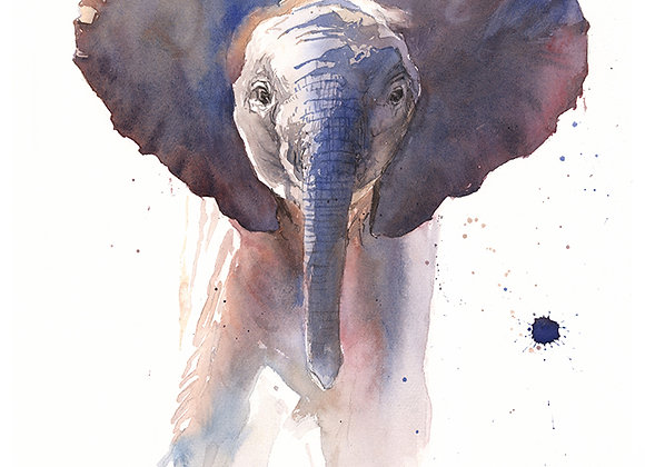 Elephant Calf Watercolor Print
