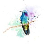 Violet Ear Hummingbird Watercolor, 8x10, 2014