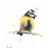 Blue Tit Watercolor