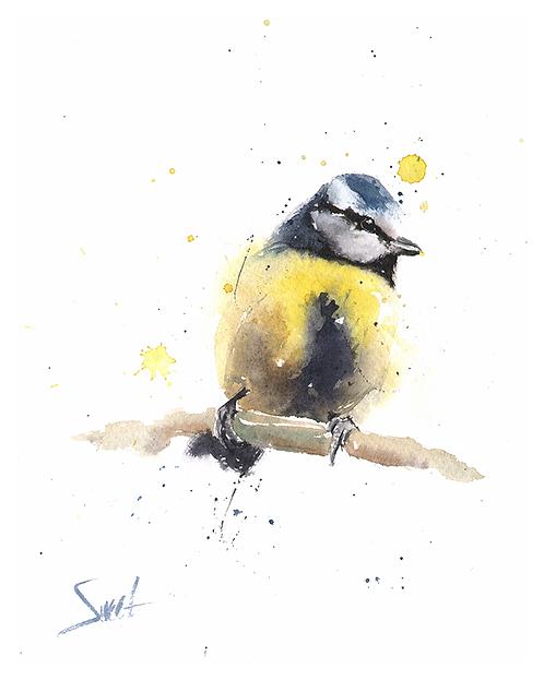Blue Tit Watercolor Print
