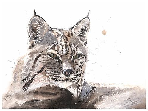 Talon Bobcat Original Watercolor Painting
