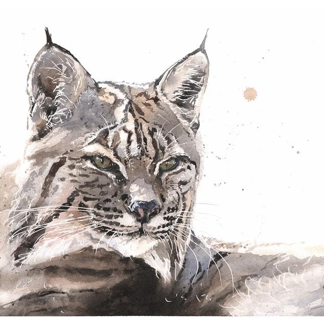 Talon Bobcat