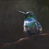 Blue Chested Hummingbird, 10x10, 2015