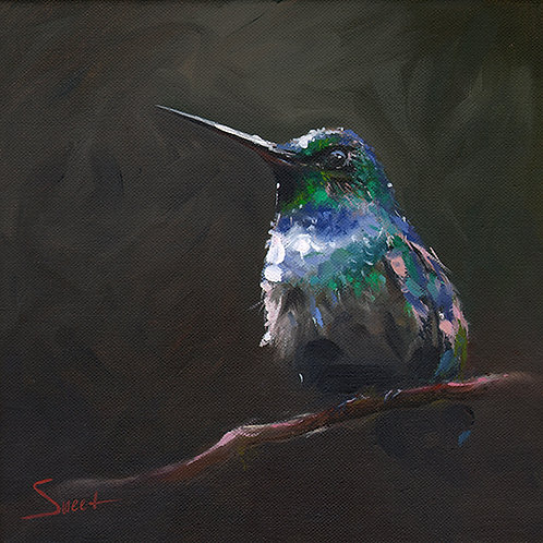 Blue Chested Hummingbird Oil Painting
