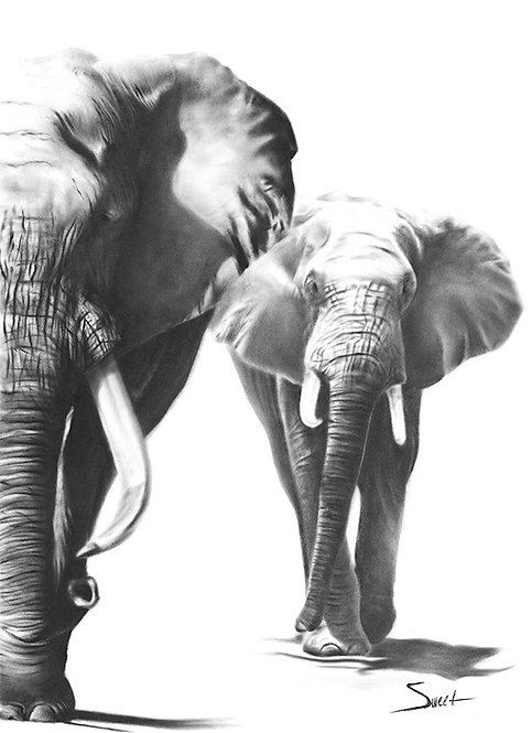Elephants Dry Brush Painting