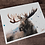 Thumbnail: Moose Watercolor Print