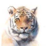 Watercolor Tiger, 16x20, 2016