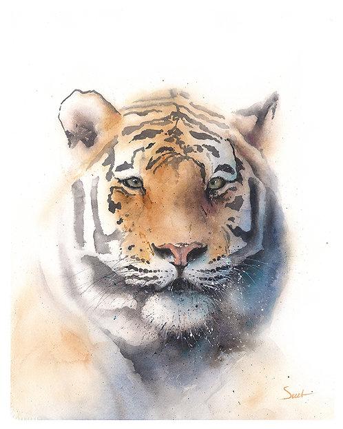 Bengal TIger Watercolor Print