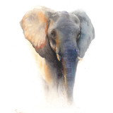 Watercolor Elephant, 16x20, 2016