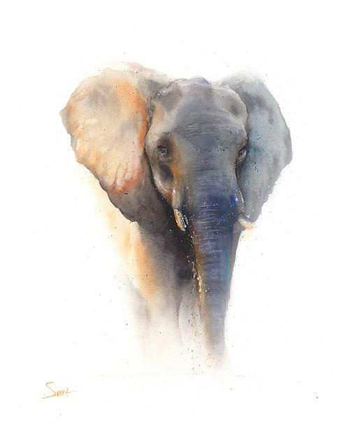 Elephant Watercolor Print 4