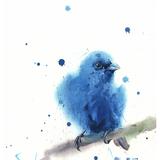 Indigo Bunting Watercolor, 8x10, 2018