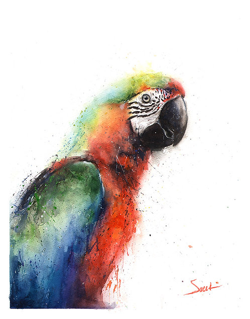 Macaw Parrot Watercolor Print