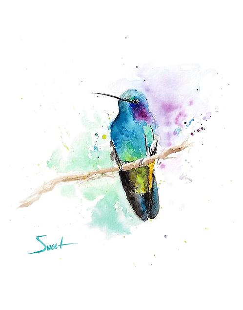 Violet Eared Hummingbird Watercolor Print
