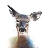 Watercolor Deer, 11x14, 2016