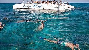 Catamaran et dauphin