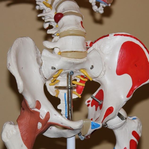 pain groin hip arthritis