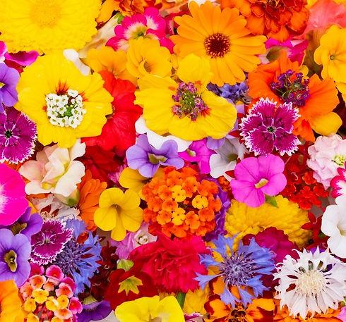 様々な花.jpg