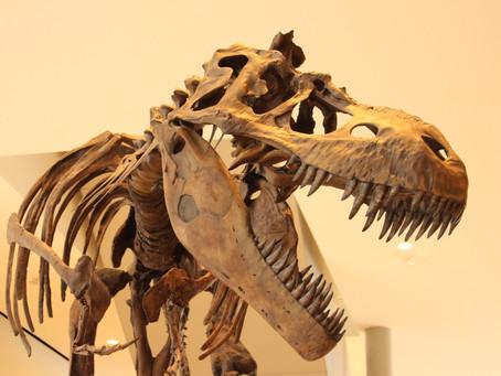 アルバータ大学で古生物学を学ぶ方法徹底解説!