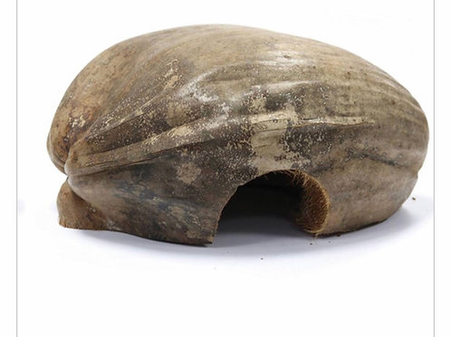 Coconut gecko home