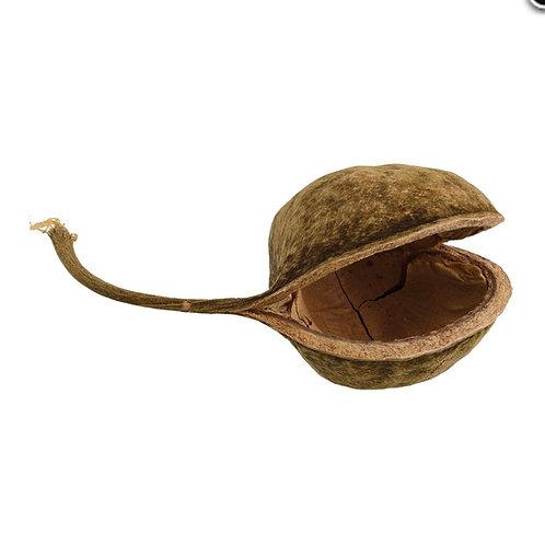 Budha Nut Hide