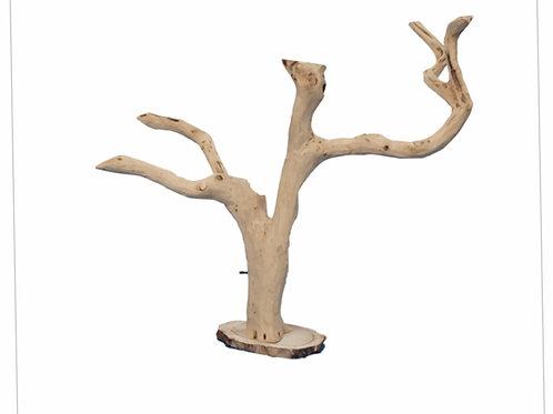 Reptile tree